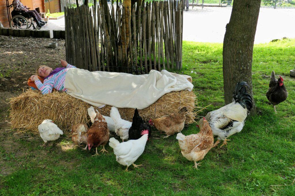 Neue Hühner versammeln sich um Klient*in